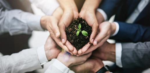 Protección del entorno y desarrollo sostenible